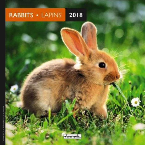 Image 0 - Calendrier 16 x 16 lapins 2018