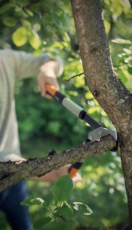 Image 5 - Fiskars - Coupe-branches PowerGearX™ L