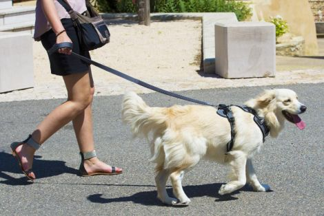 Image 7 - Idog - Harnais Style - Taille L