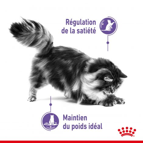 Image 2 - Croquettes Royal Canin Chat Appetite Control Care 3,5 kg