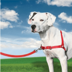 Petsafe - Harnais Easy walk Rouge Taille M