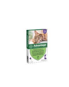 Advantage 80 - Traitement anti-puces chat et lapin 4 pipettes