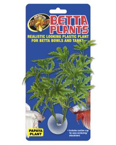 Betta Plant – Papaya