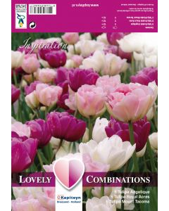 Bulbe de Lovely Combi tulipes doubles rose, pourpre & blanc
