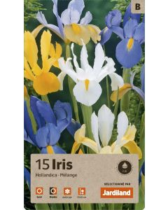 Bulbes d'Iris Hollandica en mélange, calibre 7/8 (x15)