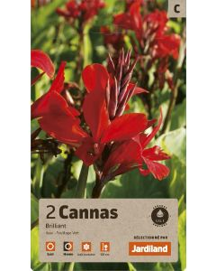 Bulbes de Cannas Brilliant calibre 1 (x2)