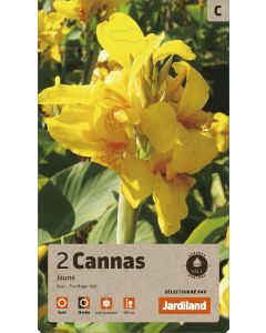 Bulbes de Cannas Jaune calibre 1 (x2)