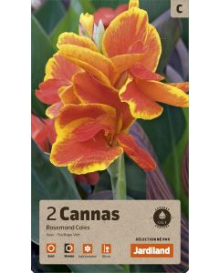 Bulbes de Cannas Rosemond Coles calibre 1 (x2)