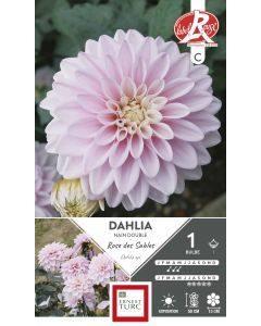 Bulbes de Dahlia Nain Double Rose des sables Label Rouge X1