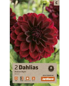 Bulbes de Dahlias arabian night deco calibre 1 (x2)