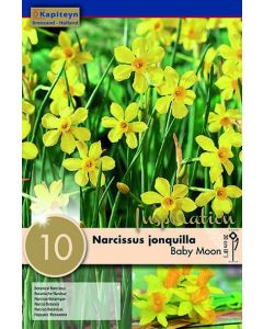 Bulbes de Narcisse Baby Moon x10, Calibre 8/10