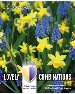 Bulbes Lovely Combinations Narcisse-Muscari x50, calibre 7/8