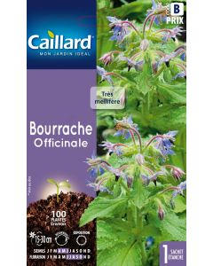 Caillard - Graines de bourrache officinale