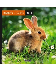 Calendrier 16 x 16 lapins 2018