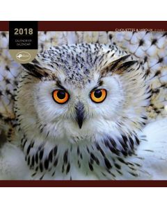 Calendrier 30 x 30 chouettes 2018