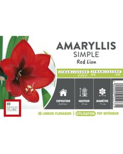 Ernest Turc - Bulbe d'Amaryllis Simple Red Lion vrac x1