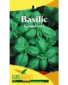 Graines de Basilic Grand Vert aromatique