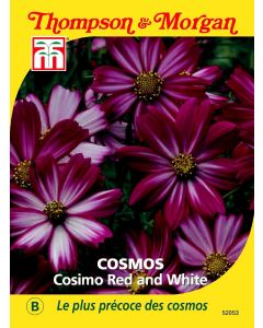 Graines de Cosmos Cosimo Red And White