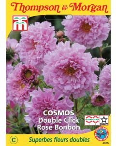 Graines de Cosmos Double Rose
