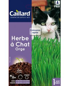 Graines de Herbe À Chat