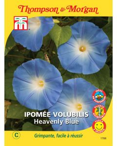 Graines de Ipomée Volubilis Heavenly Blue