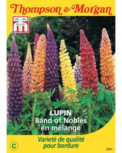 Graines de Lupin Band Of Nobles