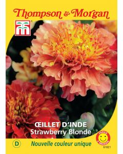 Graines de Oeillet D'Inde Strawberry Blonde
