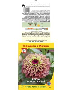 Graines de Sachet de Zinnia queeny lime red