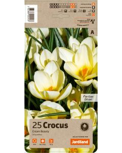 Jardiland - Bulbes de Crocus botanique cream beauty x25