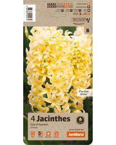 Jardiland - Bulbes de Jacinthe city of haarlem x4