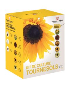 Kit de culture tournesols