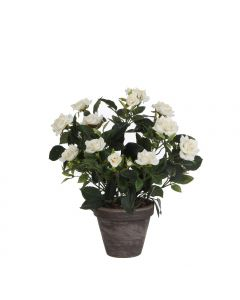 Rosier Blanc Artificiel en pot Stan gris H.33 x Ø 25 cm