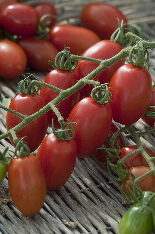 Image  - Tomate cerise 'Trilly'