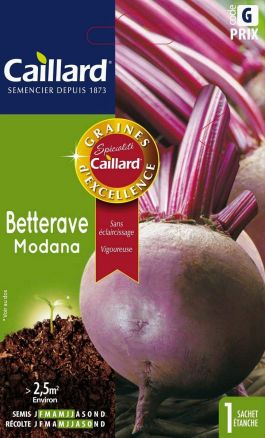 Betterave Modana