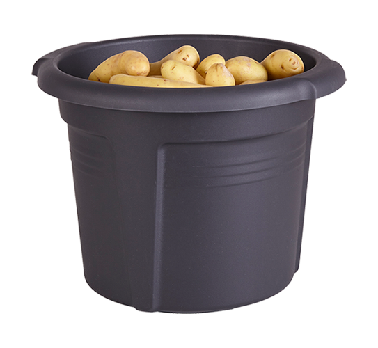 Green basics pot de pommes de terre